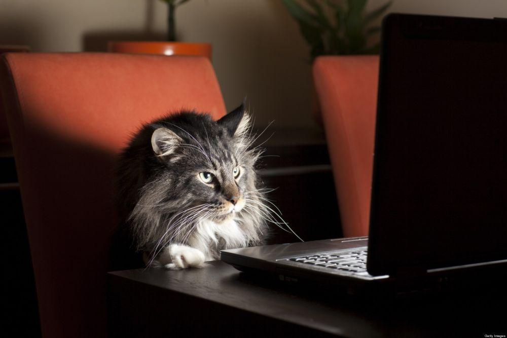 Котенок на работе картинка