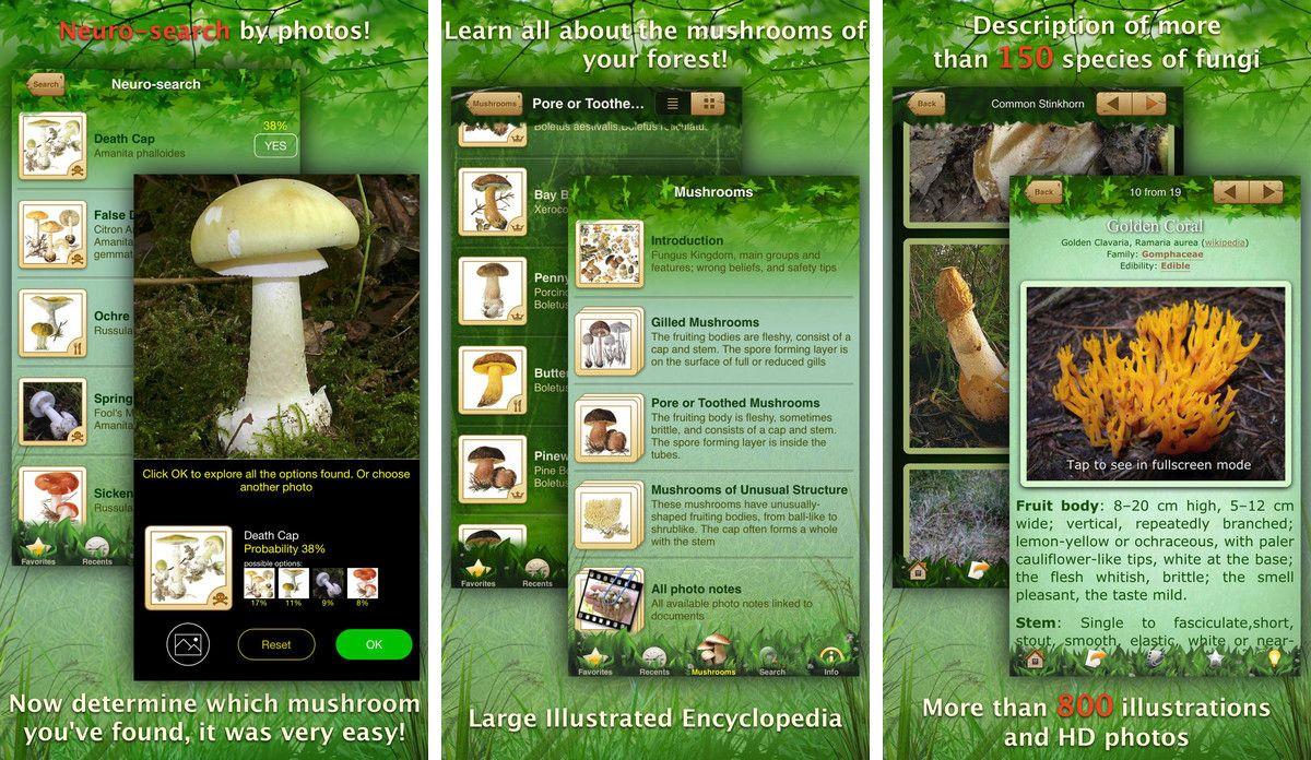программа определения грибов по фото
